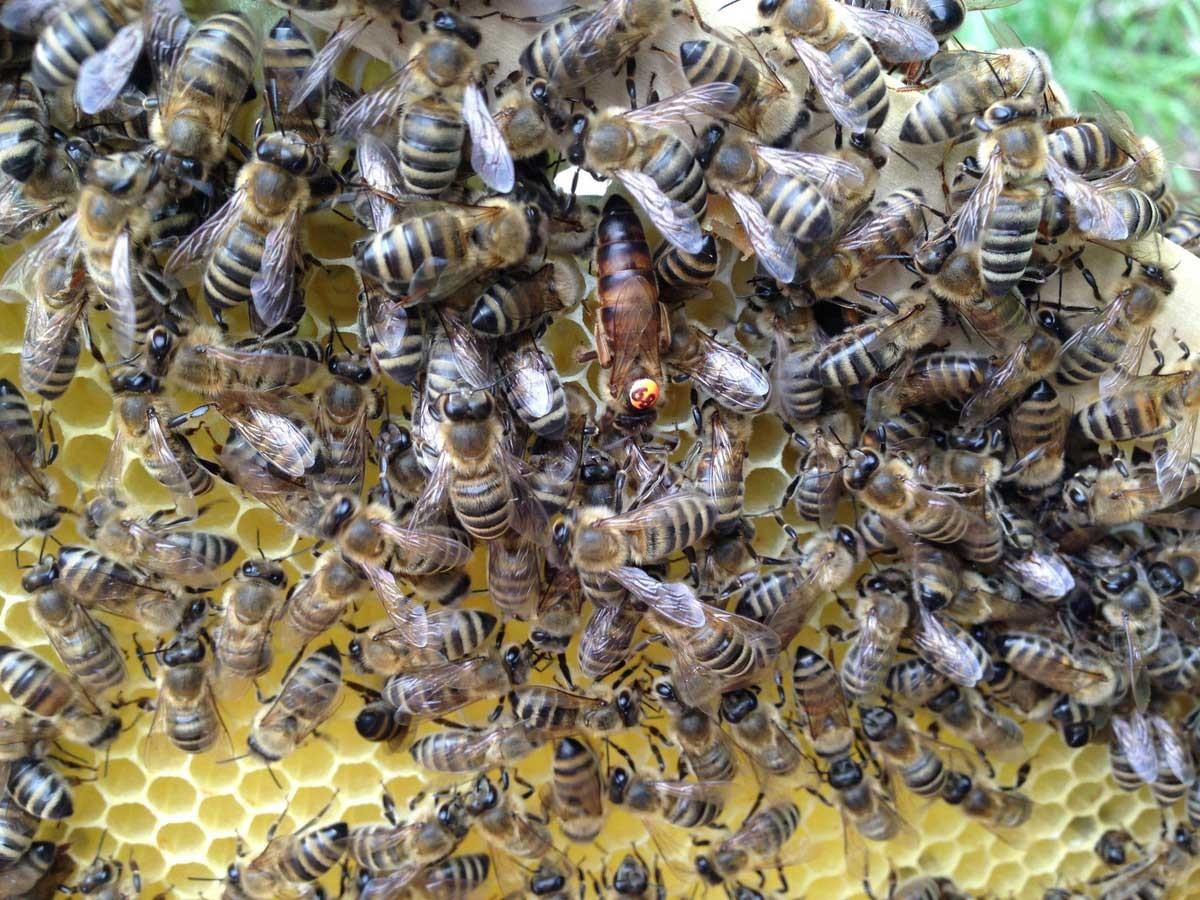 Čebelarstvo Lužar
