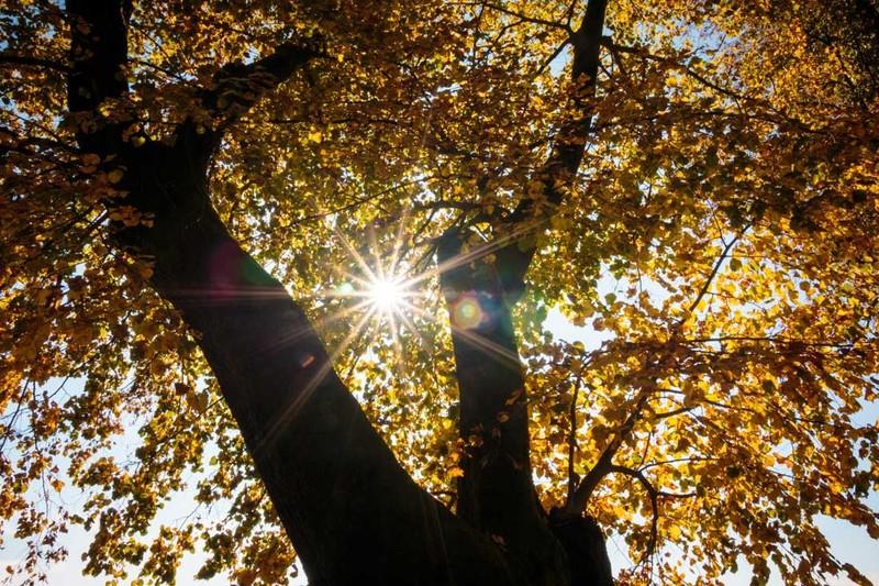 Grobeljski drevored