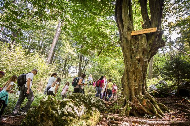 Gozdna učna pot Šumberk